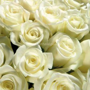 Ανθοδέσμη με λευκά τριαντάφυλλα (17τεμ.)