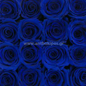 Dozen of blue roses (12pcs.)