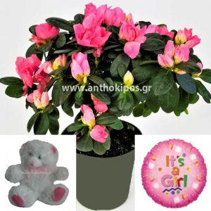 Flower arrangement for girl consists of azalea plant, teddy bear and balloon