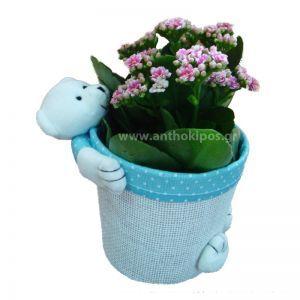 Flower arrangement for newborn baby boy