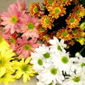 6 Bouquets chrysanthemums