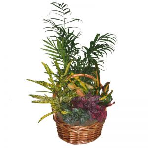 Composition with plants in basket