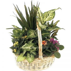 Arrangement with plants In basket