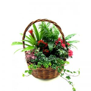 Composition with plants in basket.