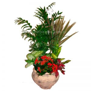 Plant arrangement in clay base