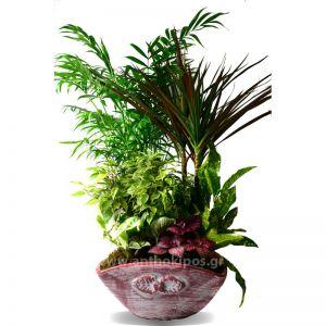 Σύνθεση με φυτά σε πήλινο κασπώ