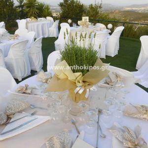 Δεξίωση Γάμου με λεβάντες