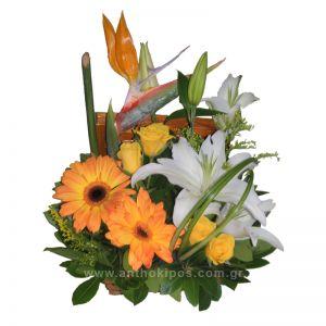 Ανθοσύνθεση σε μπαουλάκι με κίτρινα τριαντάφυλλα, πορτοκαλί ζέρμπερες, λευκά οριεντάλ και πουλί του παραδείσου