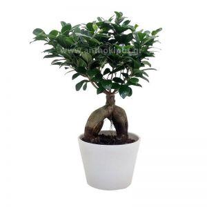 Bonsai in clay pot