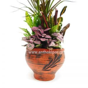 Plant arrangement in clay base