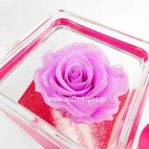 Τριαντάφυλλο λιλά που ζει για πάντα