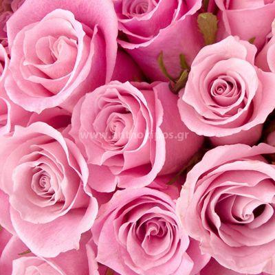 Pink roses (17pcs.)