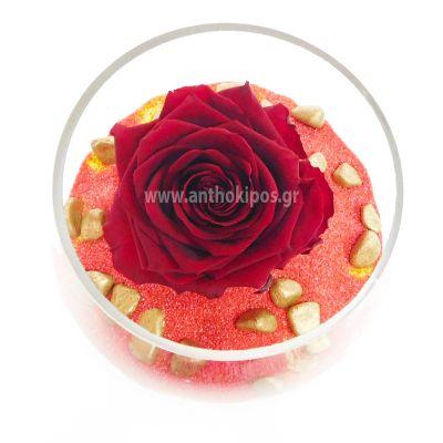 Τριαντάφυλλο που ζει για πάντα