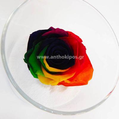 Τριαντάφυλλο πολύχρωμο-rainbow που ζει για πάντα