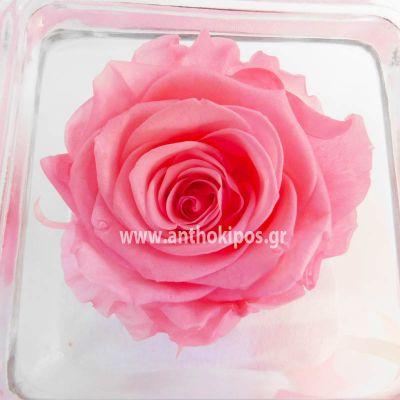 Τριαντάφυλλο ροζ που ζει για πάντα